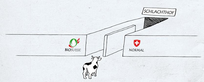 Bio oder normal Schlachthof Tierrechtsgruppe Zürich